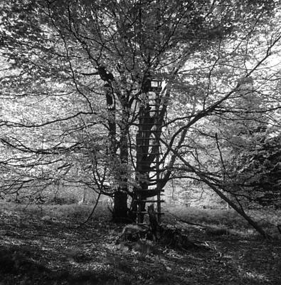 Hunter's Hide In A Beech Tree - Monochrome Poster by Ulrich Kunst And Bettina Scheidulin