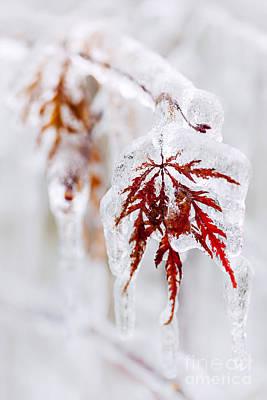 Icy Winter Leaf Poster by Elena Elisseeva
