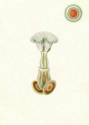 Illustration Shows Aquatic Invertebrates Poster
