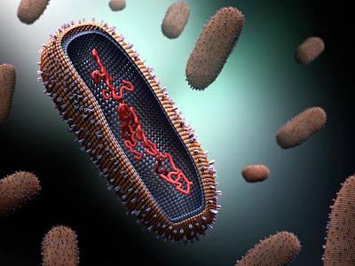 Influenza Virus Poster