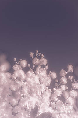 Infrared Nature Bloom Poster