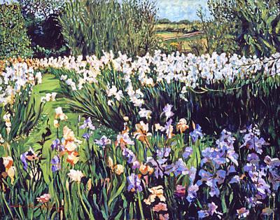 Irises Provence Poster by David Lloyd Glover