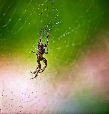Itsy Bitsy Spider My Ass  Poster by Steve Harrington