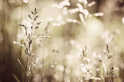 June Grass Flowering Poster by Elena Elisseeva