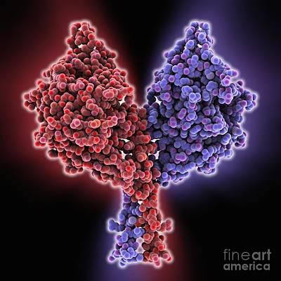 Kinesin Motor Protein Poster by Laguna Design