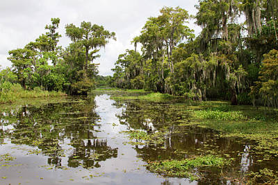 La, Lafitte, Airboat Swamp Tour Poster by Jamie and Judy Wild