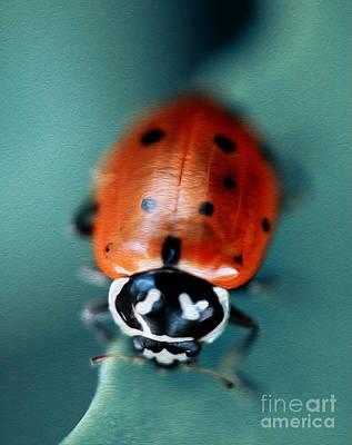 Ladybug On Green Leaf Poster