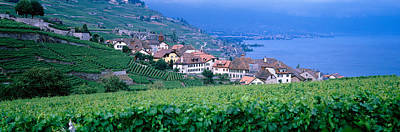 Lake Of Geneva, Vineyards, Rivaz Poster by Panoramic Images