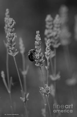 Lavender And The Bee Poster by Tannis  Baldwin