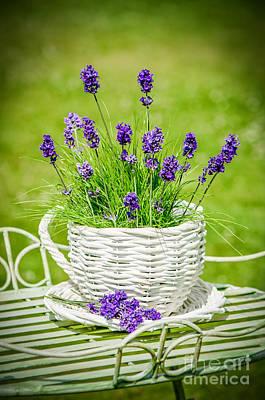 Lavender Poster by Amanda Elwell