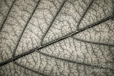 Leaf Texture Poster by Elena Elisseeva