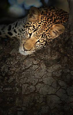 Leopard Portrait Poster by Johan Swanepoel