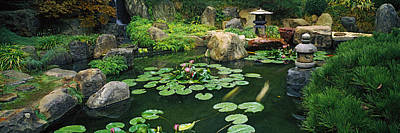 Lilies In A Pond At Japanese Garden Poster