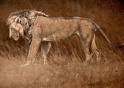 Poster featuring the digital art Lion Sketch by Aaron Blaise