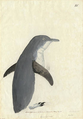 Little Penguin Poster by Natural History Museum, London