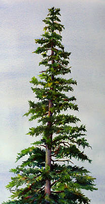 Lone Spruce Poster by Karen Mattson