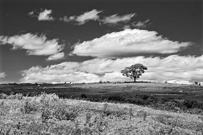 Lone Tree And Sky In Blueberry Field Maine Photograph  Poster by Keith Webber Jr