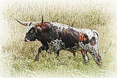 Poster featuring the photograph Longhorn Bull - A Strong Portrait by Bill Kesler