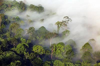 Lowland Rainforest Poster by Alex Hyde