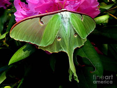 Lady Luna Moth Poster by Janine Riley