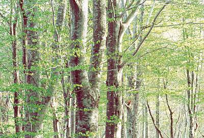 Lush Forest Poster by Panoramic Images