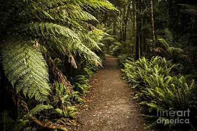 Lush Green Tasmanian Forest Trail In Strahan Poster by Jorgo Photography - Wall Art Gallery