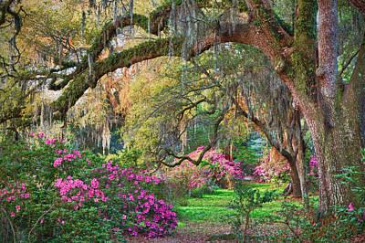 Magnolia Plantation Azaleas Poster