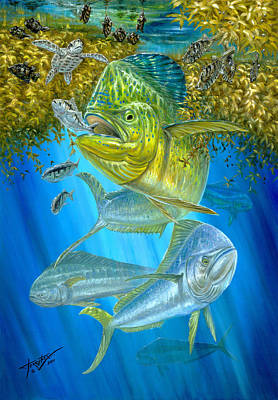Mahi Mahi Hunting In Sargassum Poster by Terry  Fox