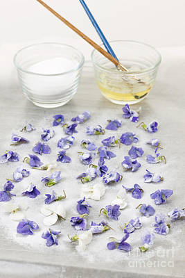 Making Candied Violets Poster by Elena Elisseeva