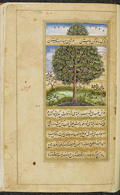 Mango Tree Poster by British Library