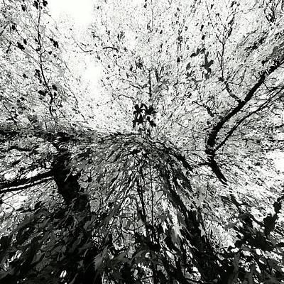 Maple Tree Inkblot Poster