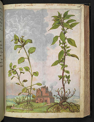 Medicinal Plants Poster by British Library