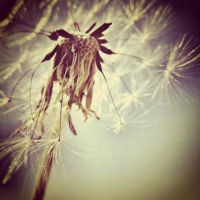 #mgmarts #dandelion #makeawish #wish Poster by Marianna Mills
