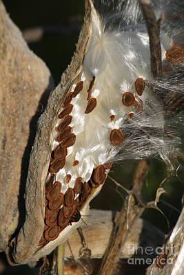 Milkweed With Stink Bug Poster