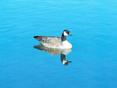 Poster featuring the photograph Mirror Goose by Kerri Mortenson