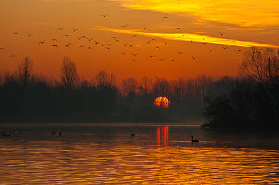 Morning Over River Poster