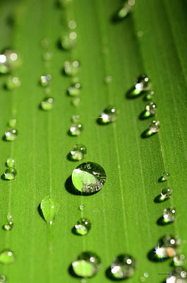 Water Drop On Green Leaf Poster