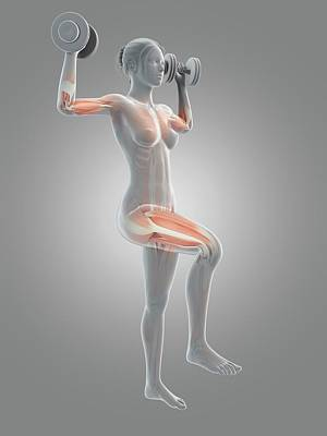 Muscles Of Weight Lifter Poster