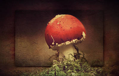 Mushroom Poster by Heike Hultsch