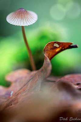 Mushroom Mycena Sp. Poster by Dirk Ercken