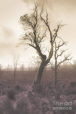 Mystery Tree In A Dark Scary Forest Poster by Jorgo Photography - Wall Art Gallery