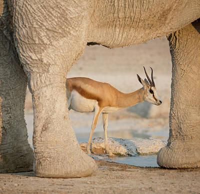 Namibia, Etosha National Park, Nebrowni Poster by Jaynes Gallery
