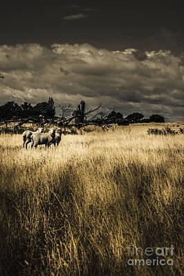 Nature Photo Of Tasmanian Countryside In Australia Poster