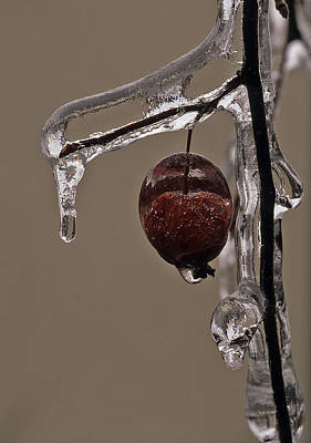 Nature's Candy Apple Poster by Tony Beck