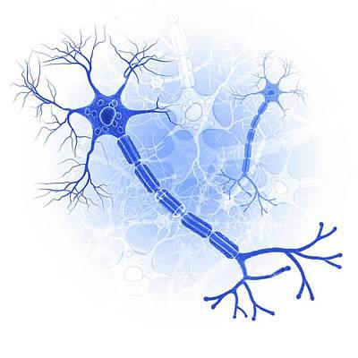 Nerve Cell Poster by Pixologicstudio