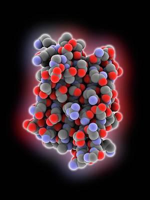 Novel Protein Poster