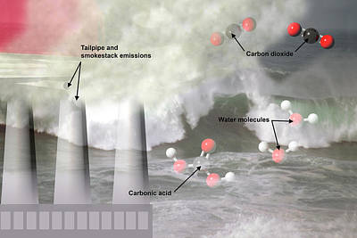 Ocean Acidification  Poster by Carol & Mike Werner