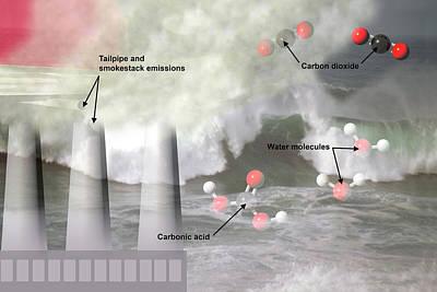 Ocean Acidification  Poster