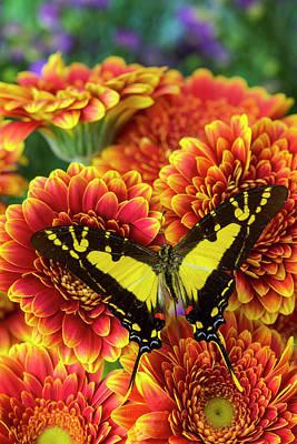 Orange Kite Swallowtail Butterfly Poster