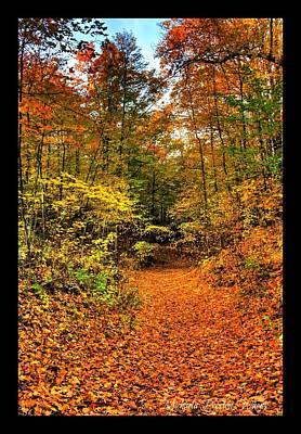Poster featuring the photograph Orange Path by Michaela Preston
